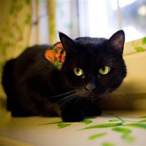 gatto-magia-nera
