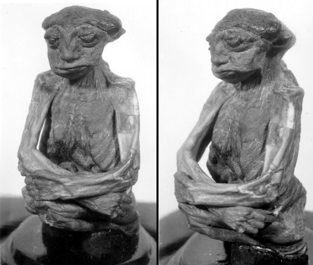 mummia-pedro-3