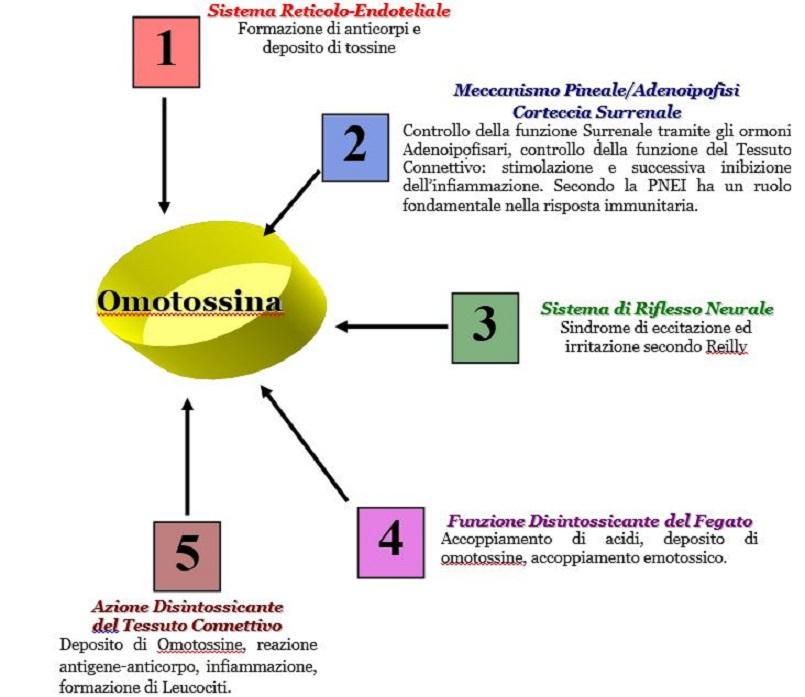 Omotossicologia Figura 1