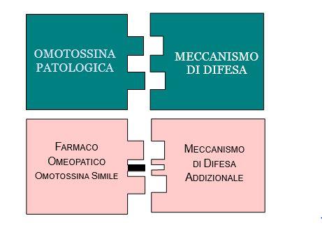 Omotossicologia Figura 2