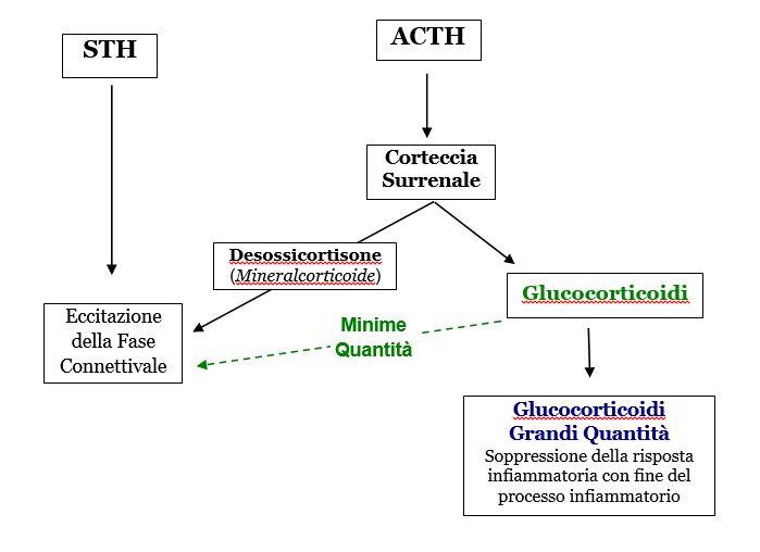 Omotossicologia Figura 3