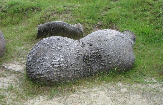 trovants romania rocce viventi