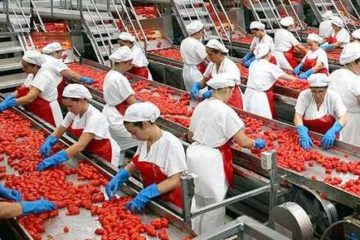 Ciò che Avviene nelle Grandi Industrie Alimentari