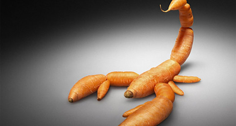 carota scorpio