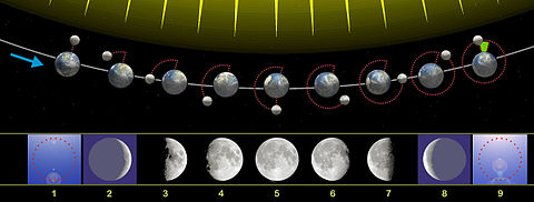 480px-Moon_phases_00