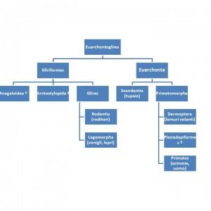Genealogia umana