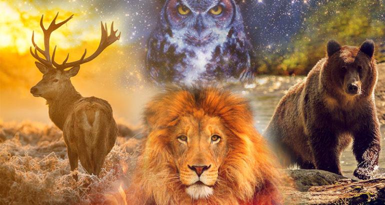animali di potere1