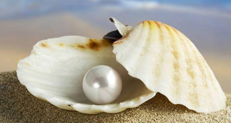perla ostrica e1450628392202