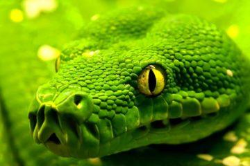 Il Codice dei Creatori e l'Ordine del Serpente [R]