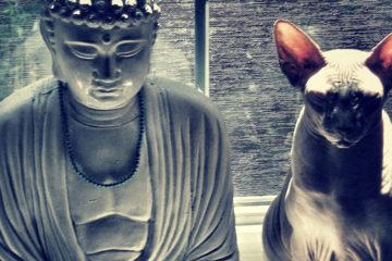 La Leggenda Buddista sui Gatti