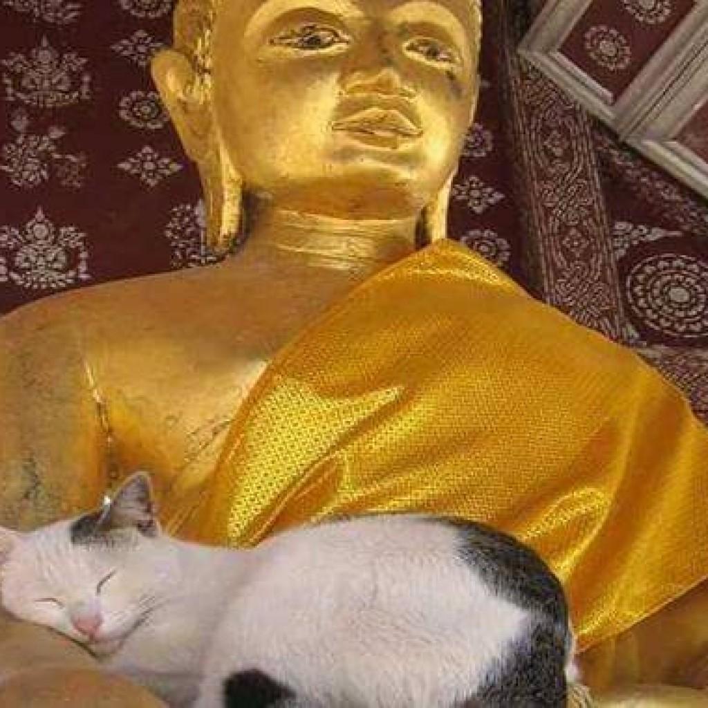 La Leggenda Buddista sui Gatti-1