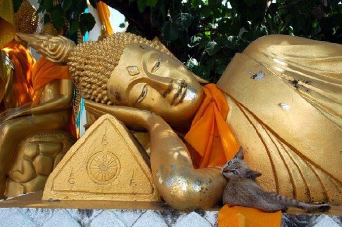 La Leggenda Buddista sui Gatti-3