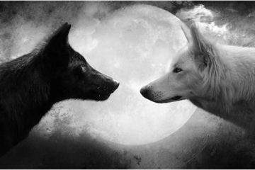 La Storia Completa dei Due Lupi