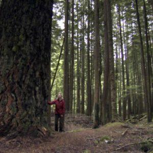 alberi parlanti 1