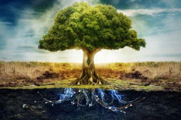 L'Albero della Mente e l'Iceberg – Differenza tra Subconscio e Inconscio
