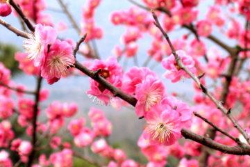 Equinozio di Primavera 2017: Data, Tradizioni e Significato Esoterico
