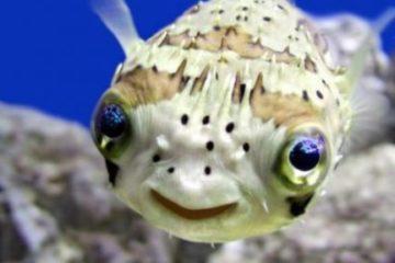 Che Pesci pigliare?