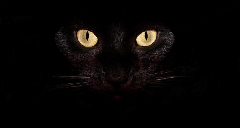 gatto nero e1580940423268
