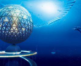Orti Subacquei, Possibile? Ecco il Giardino di Nemo