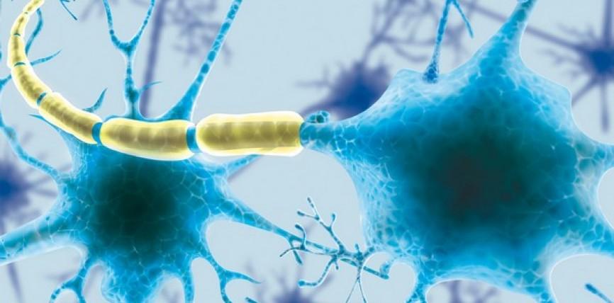 Trovato Collegamento tra Cervello e Sistema Linfatico
