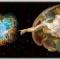 Ermetismo e Scienza Quantistica