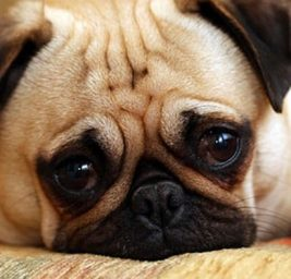 Crisi Ansiose e Tensione: arriva lo Psicologo per Cani e Gatti