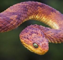 Gli Illuminati ed Il Serpente