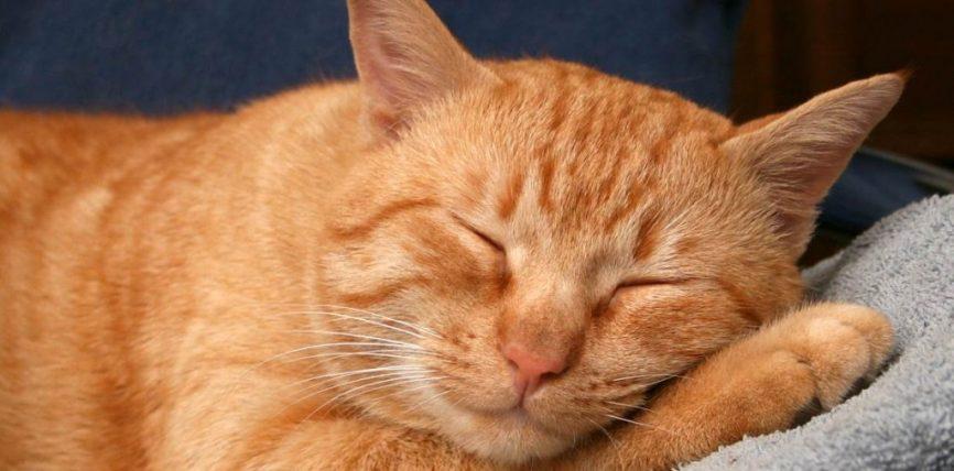 Il Sonno e le sue Fasi