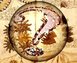 Il Manoscritto Voynich [R]
